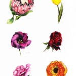 Individual Flowers – Brights lowres