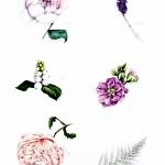 Individual Flowers – Pastels lowres
