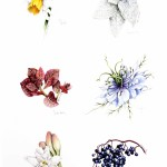 Individual Flowers – Something Different lowres